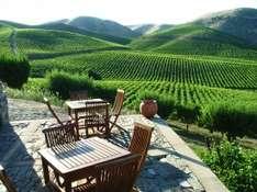 Wein ist die Seele der Region